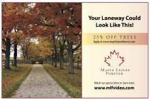 25% OFF TREES at Maple Leaves Forever