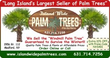 Island Wide Palm Trees is