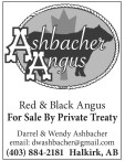 Red & Black Angus For Sale By Private Treaty