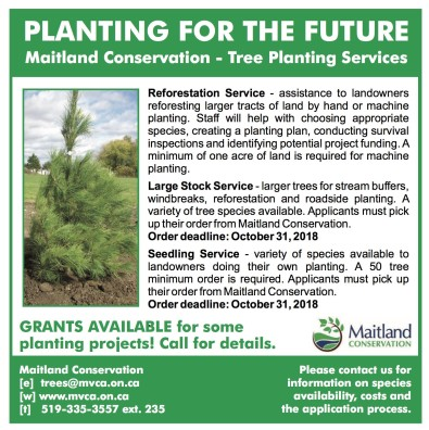 Maitland Conservation - Tree Planting Services